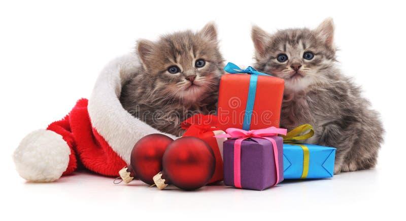 Gatitos con los regalos de la Navidad fotografía de archivo