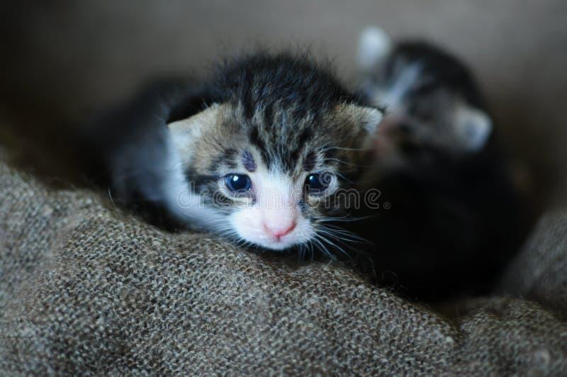 Gatitos Criaturas pequeñas, preciosas fotografía de archivo