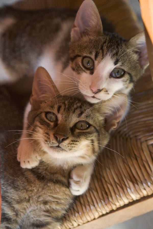 Gatitos curiosos fotografía de archivo