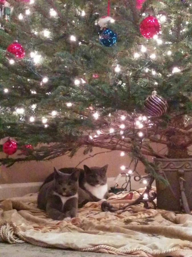 Gatitos de la Navidad foto de archivo libre de regalías
