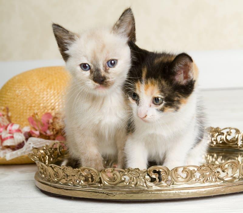 Gatitos de la parte alta imagen de archivo