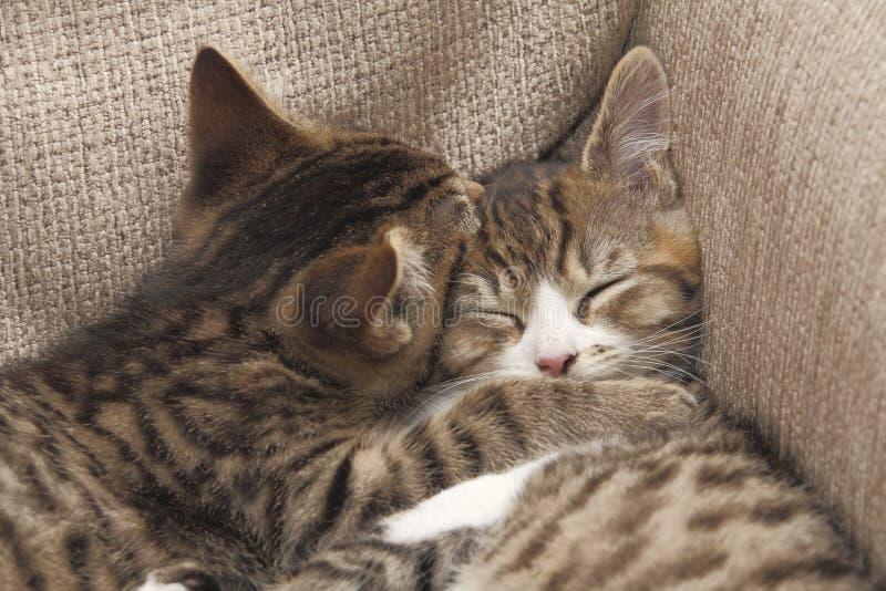Gatitos de los mejores amigos imagen de archivo