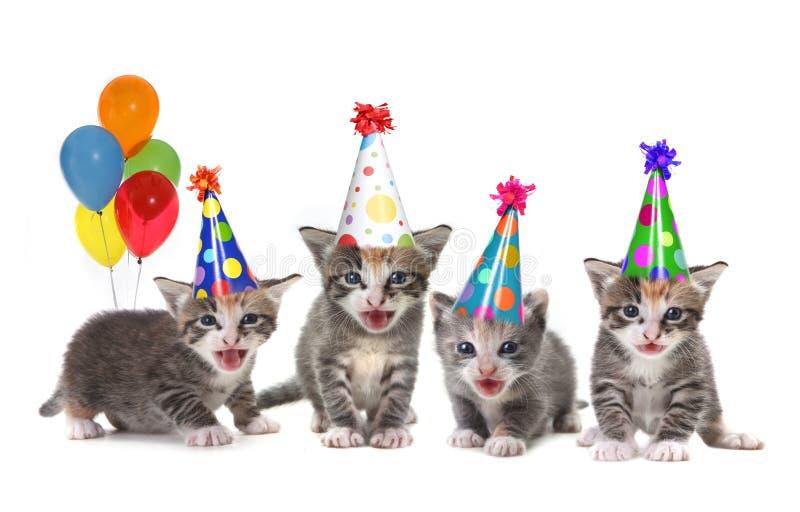 Gatitos del canto de la canción del cumpleaños en el fondo blanco imagenes de archivo
