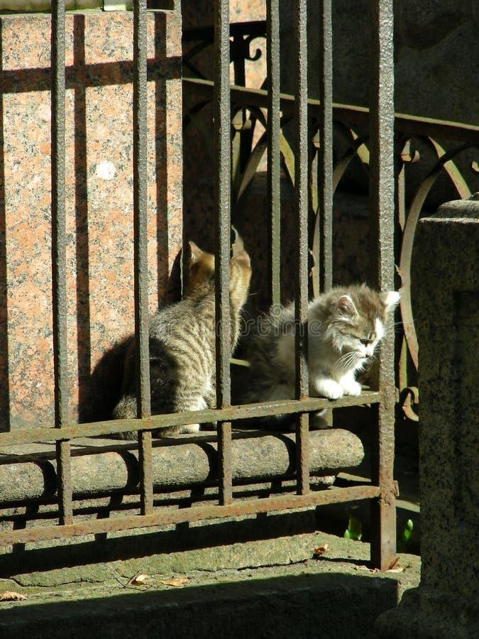 Gatitos del cementerio fotografía de archivo libre de regalías