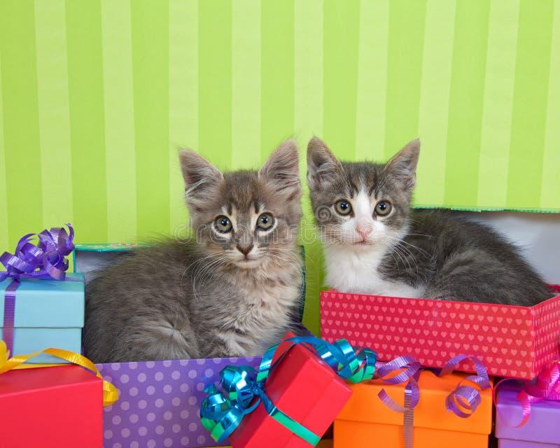 Gatitos del gato atigrado en presentes de cumpleaños fotos de archivo libres de regalías