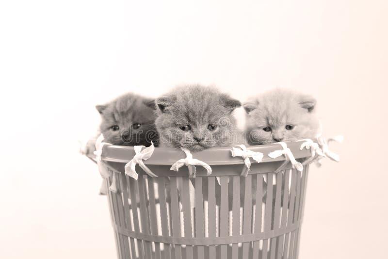 Gatitos en la cesta plástica, opinión del primer, fondo blanco fotos de archivo libres de regalías