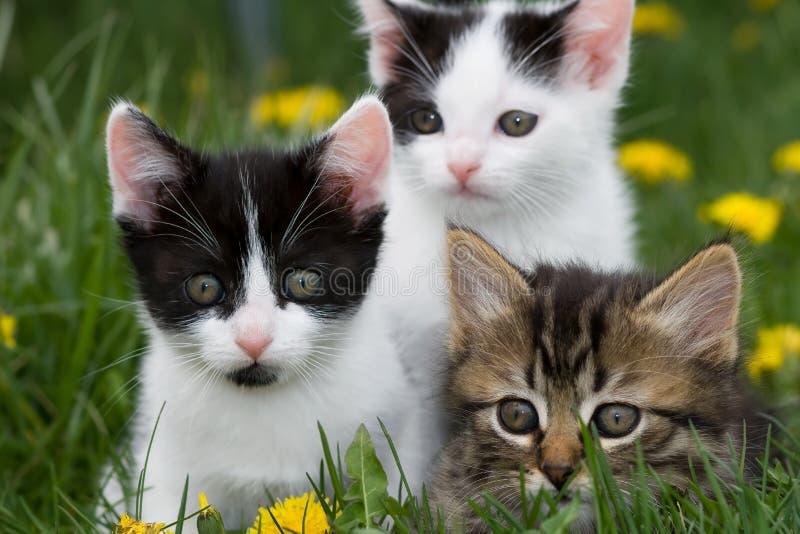 Gatitos en la hierba. fotos de archivo