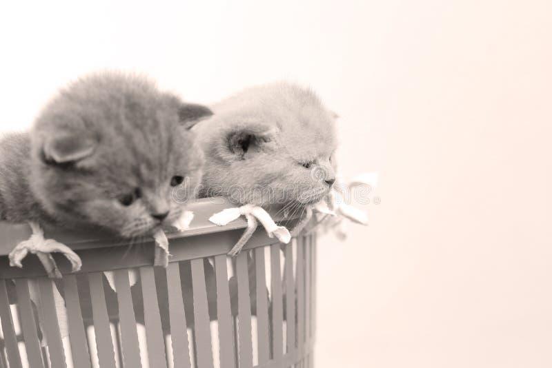 Gatitos en la pequeña cesta, opinión del primer fotos de archivo