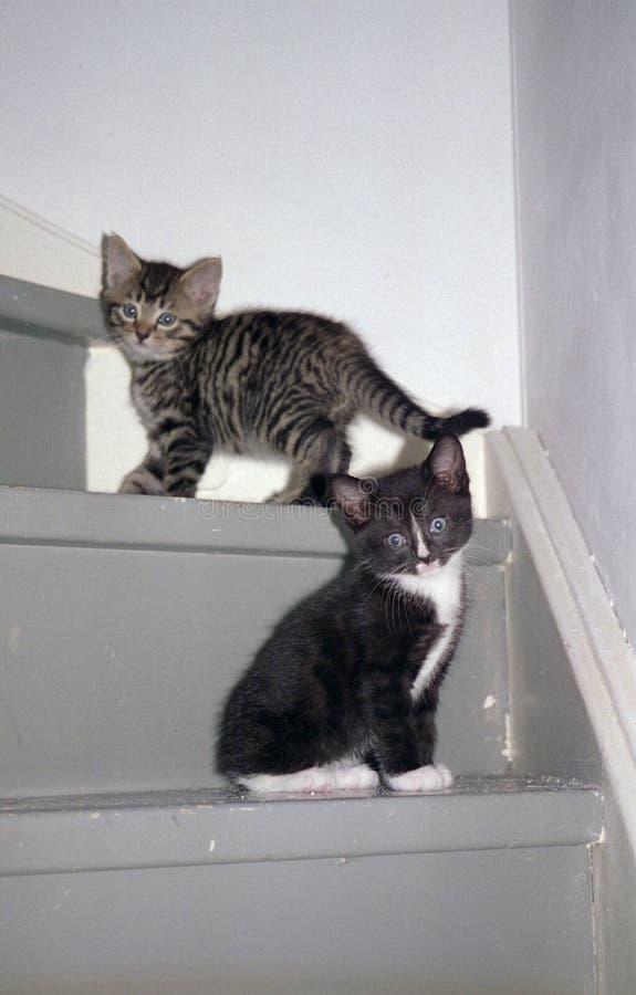 Gatitos en las escaleras. fotos de archivo