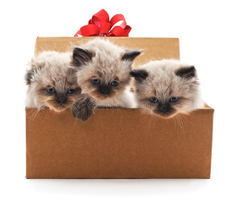 Gatitos en una caja fotografía de archivo libre de regalías