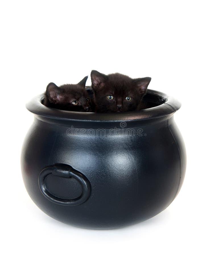 Gatitos en una caldera imagen de archivo