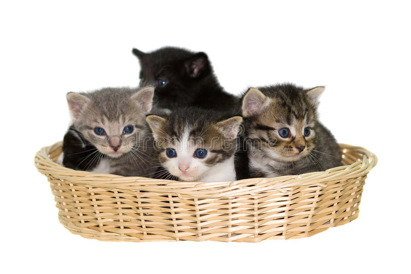 Gatitos en una cesta. fotos de archivo libres de regalías