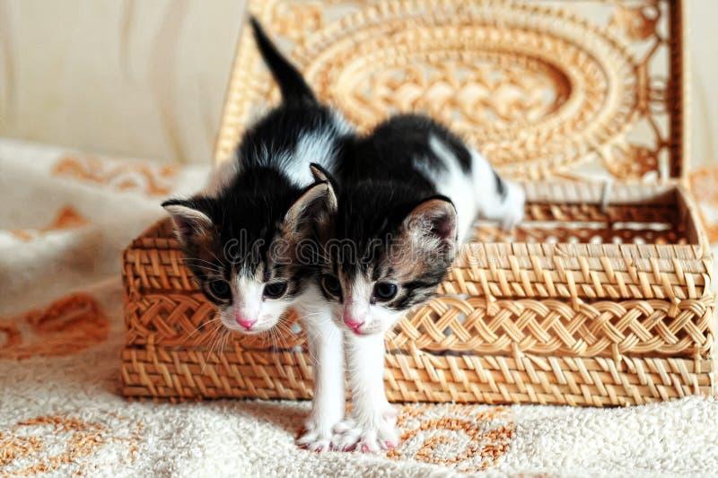 Gatitos en una cesta foto de archivo libre de regalías