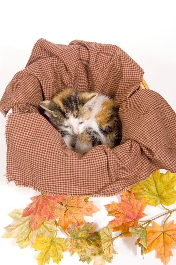 Gatitos en una cesta con las hojas de la caída imagenes de archivo