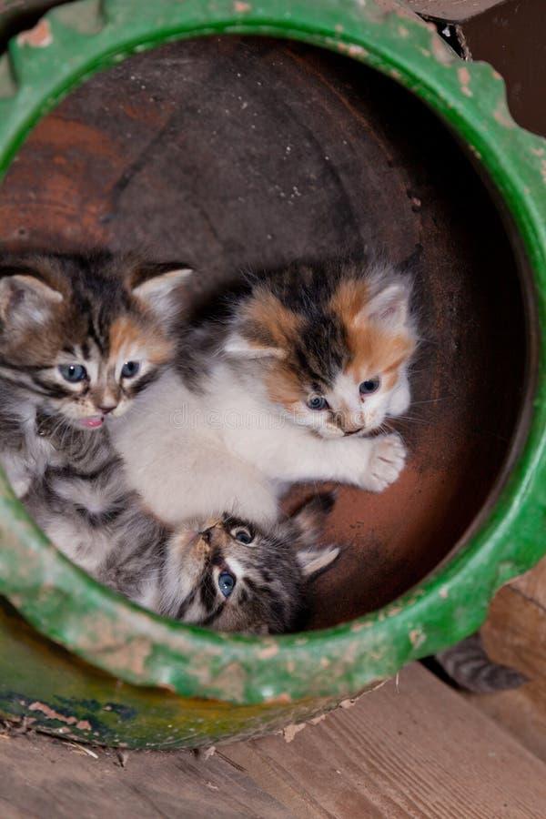 Gatitos juguetones fotos de archivo libres de regalías