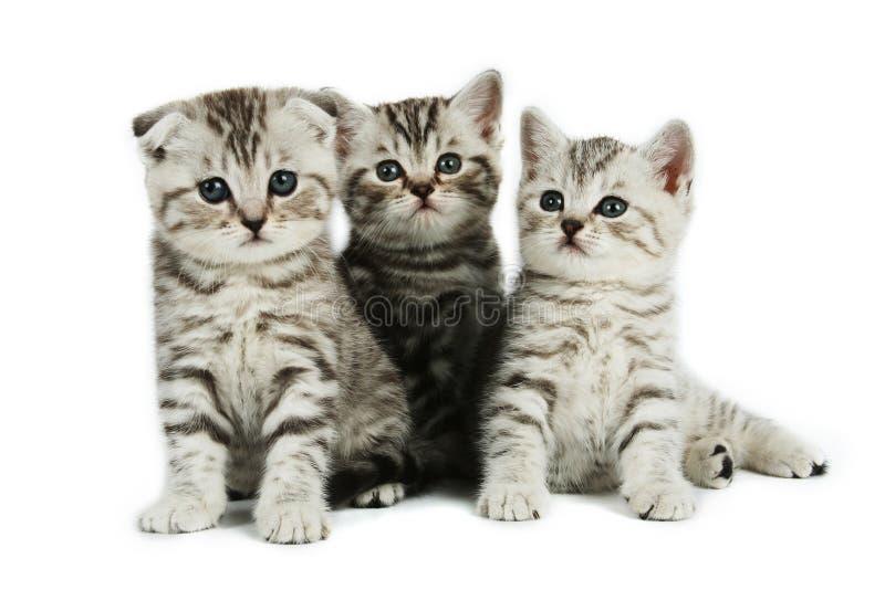 Gatitos lindos imagenes de archivo