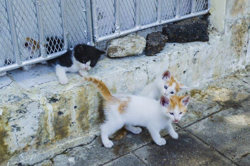 Gatitos lindos y hermosos que juegan y que exploran fuera de su hogar en marrón, negro y gris fotos de archivo