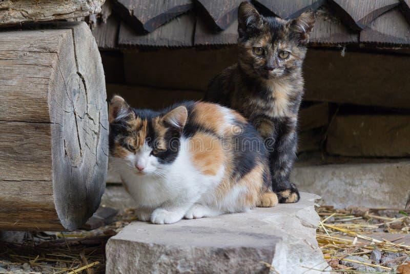 Gatitos manchados divertidos en la yarda del pueblo fotos de archivo libres de regalías