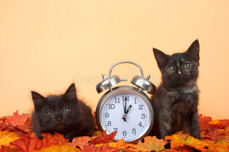Gatitos negros en hojas de otoño con el reloj, concepto del horario de verano fotografía de archivo libre de regalías