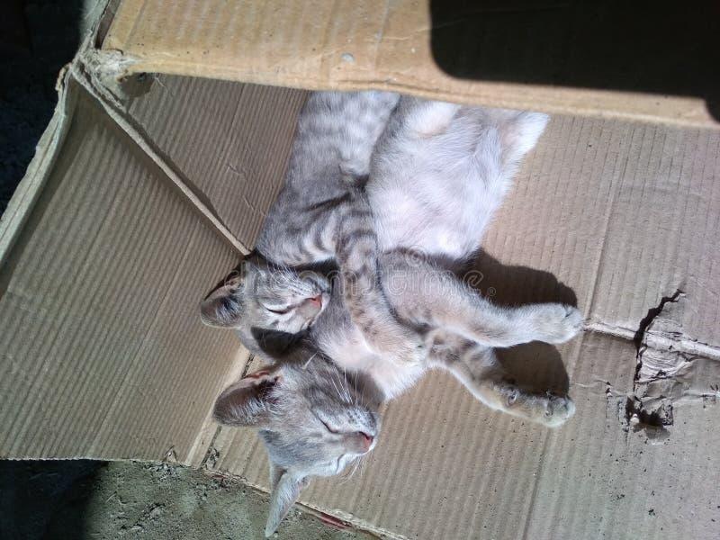 Gatitos preciosos foto de archivo