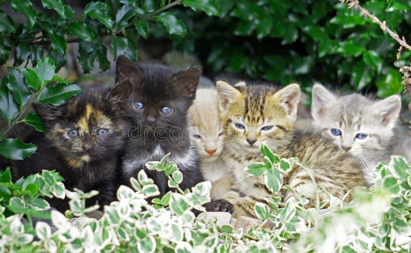 Gatitos que abrazan imagenes de archivo
