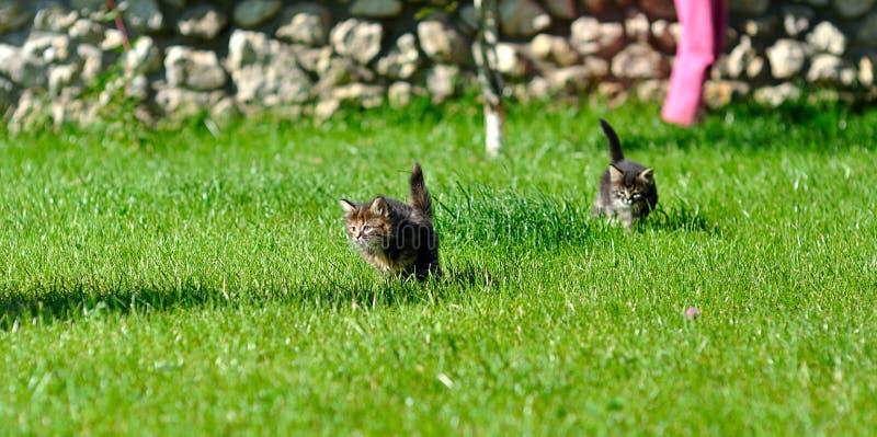 Gatitos que juegan en la hierba imagenes de archivo