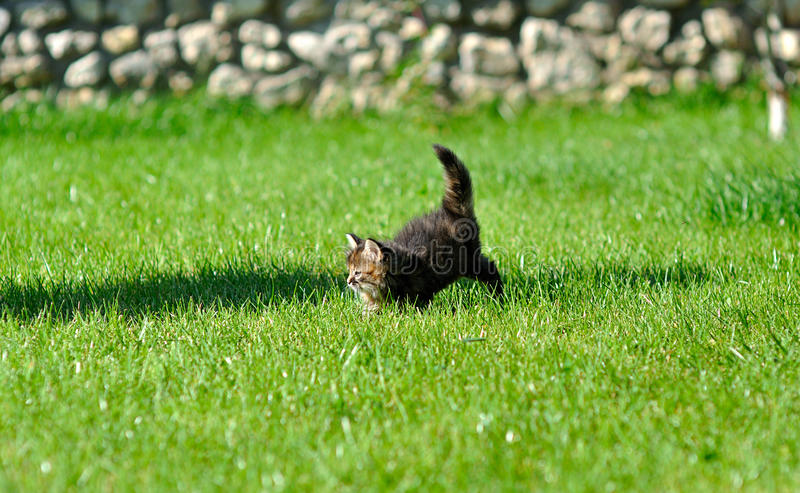 Gatitos que juegan en la hierba imagen de archivo libre de regalías
