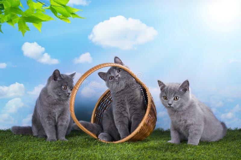 Gatitos que juegan en la hierba en un día de verano soleado imagen de archivo libre de regalías