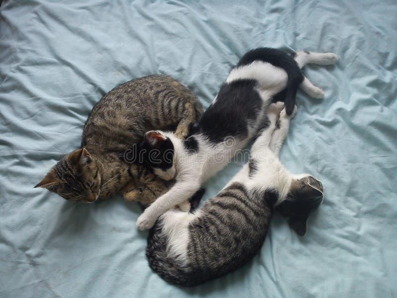 Gatitos que juegan en una cama imagen de archivo