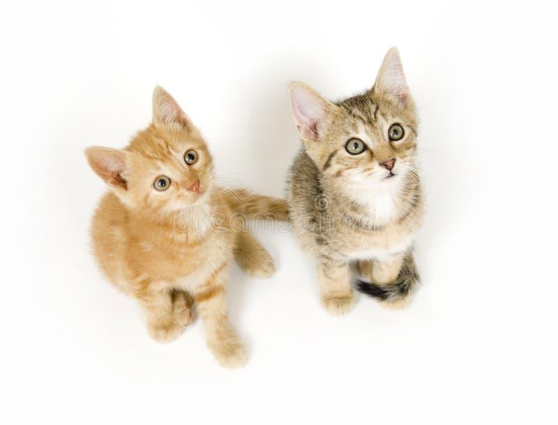 Gatitos que miran para arriba fotografía de archivo libre de regalías