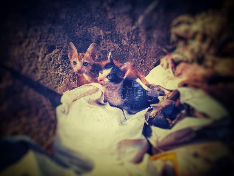 Gatitos que se sientan en los bolsos imagen de archivo