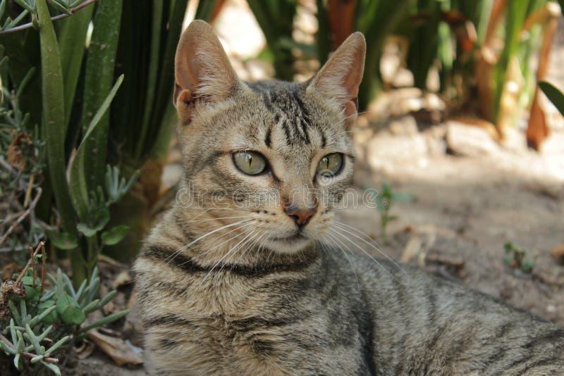 Download Gato imagen de archivo. Imagen de ojos, mamífero, gatito - 100527233