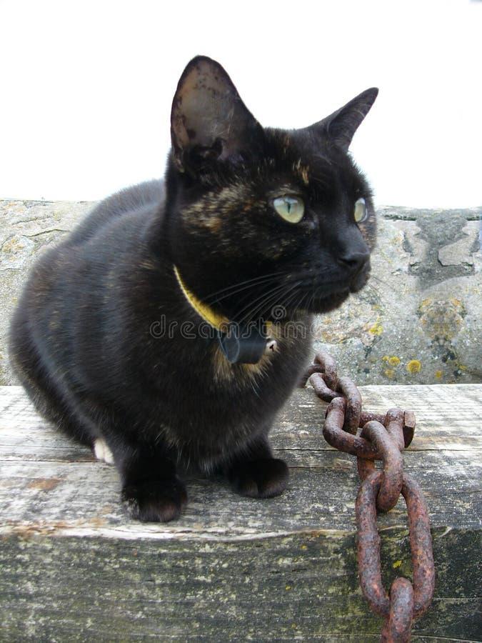 Download Gato imagem de stock. Imagem de porto, bichano, gato, gatinho - 100717