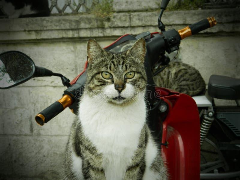 Download Gato foto de archivo. Imagen de moto, holiday, mullido - 42425918