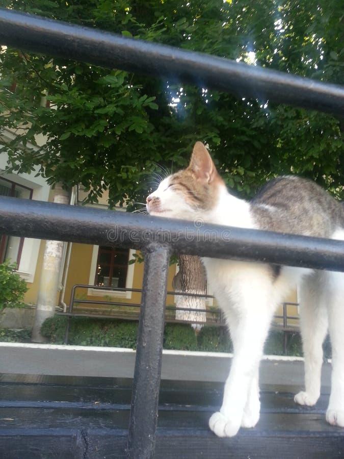 Download Gato imagen de archivo. Imagen de querido, hermoso, mullido - 44854827