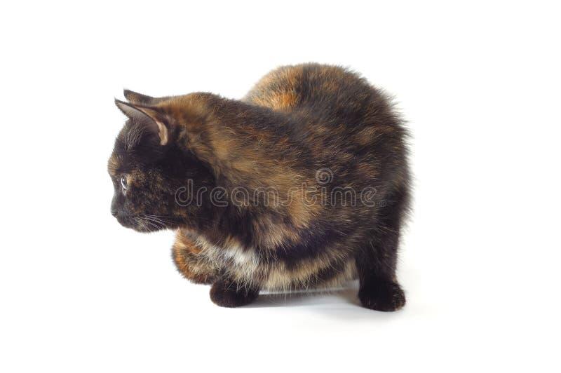 Download Gato foto de archivo. Imagen de rayado, oído, doméstico - 7283318