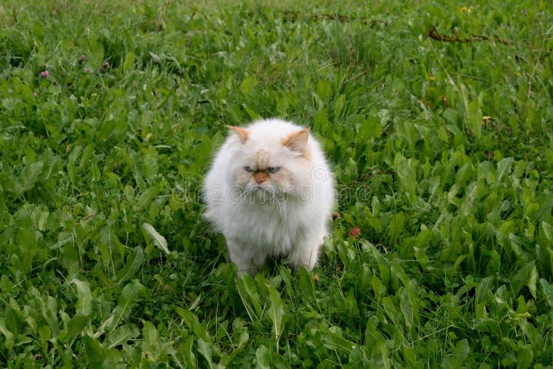 Download Gato foto de archivo. Imagen de roca, hermoso, blanco - 7285514