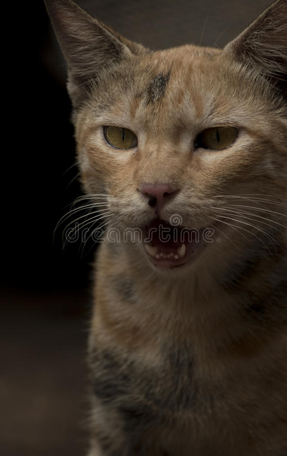Gato, imagen de archivo libre de regalías
