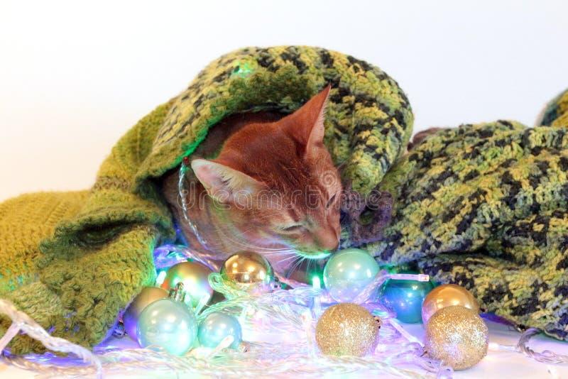 Gato abisinio del ` s del Año Nuevo con las bolas y la guirnalda perfeccione para hacer publicidad, tarjetas, enhorabuena en una  imágenes de archivo libres de regalías