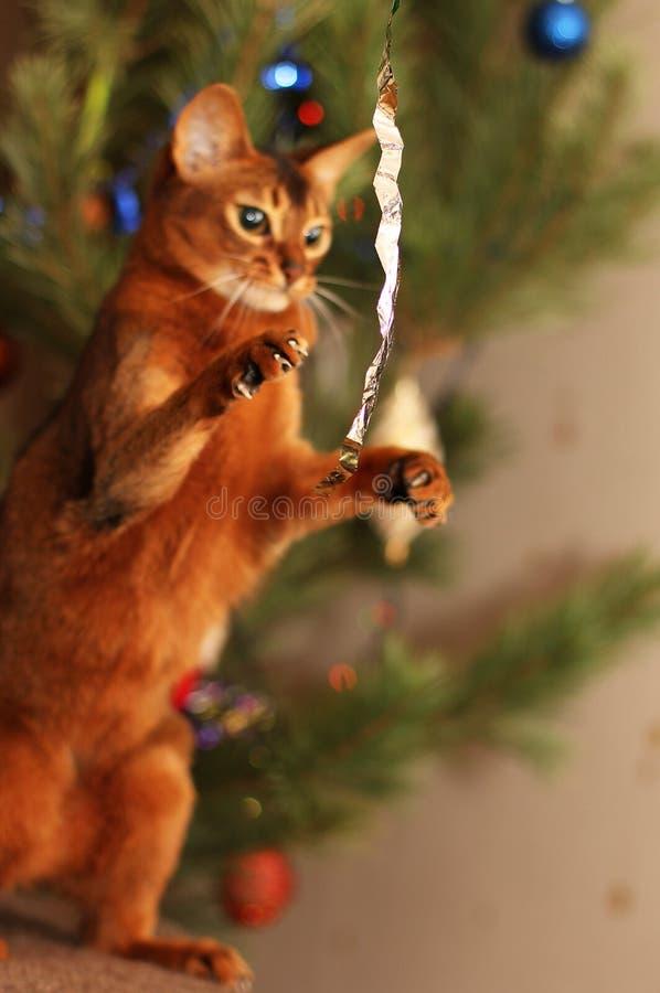 Gato abisinio que juega con malla cerca del árbol del Año Nuevo imagen de archivo libre de regalías