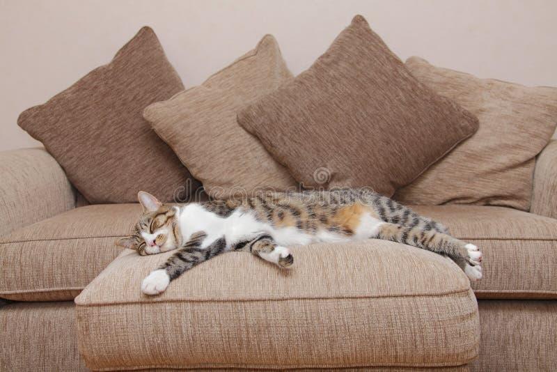 Gato acolhedor do sofá imagens de stock royalty free