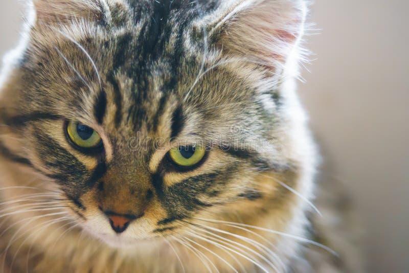 Gato acusatório fotos de stock
