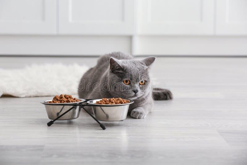 Gato adorable cerca de los cuencos con la comida en casa foto de archivo libre de regalías