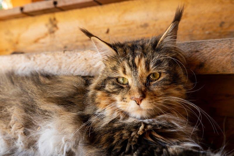 Gato Adorable y Corto fotografía de archivo libre de regalías