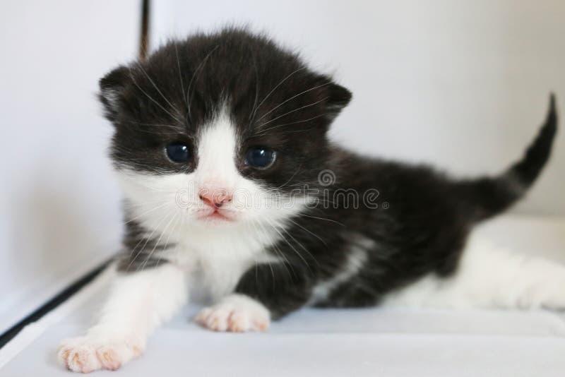 Gato adorador imagens de stock royalty free