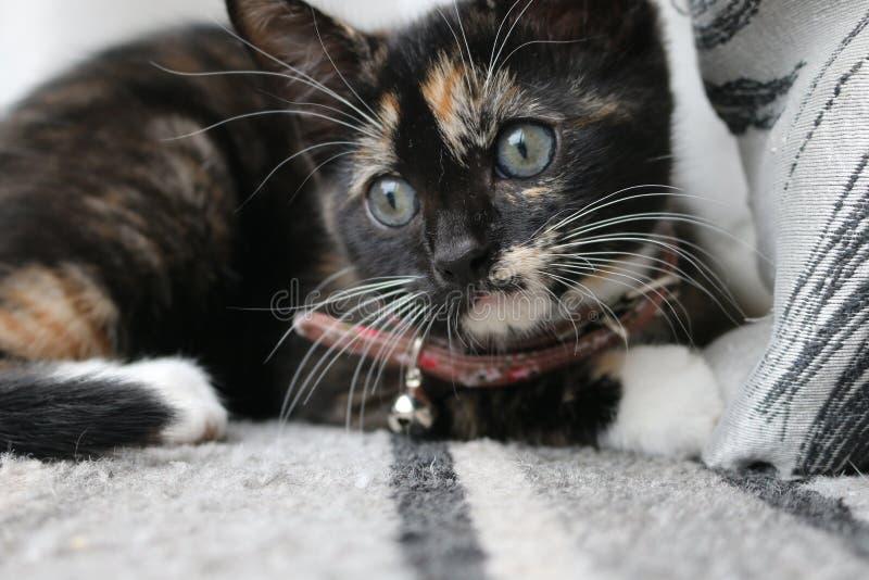 Gato adorador que olha a câmera fotos de stock