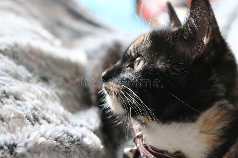 Gato adorador que olha a câmera imagens de stock royalty free