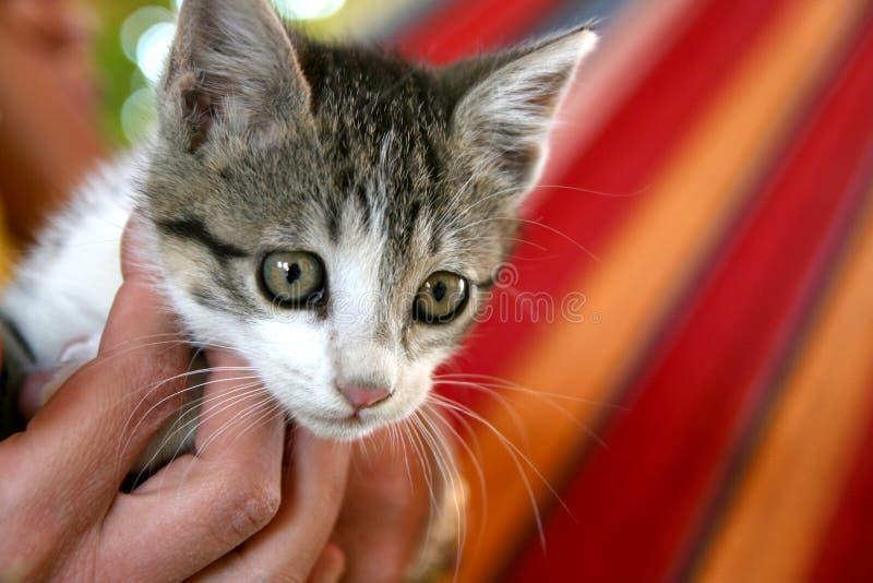 Gato agradable fotos de archivo libres de regalías