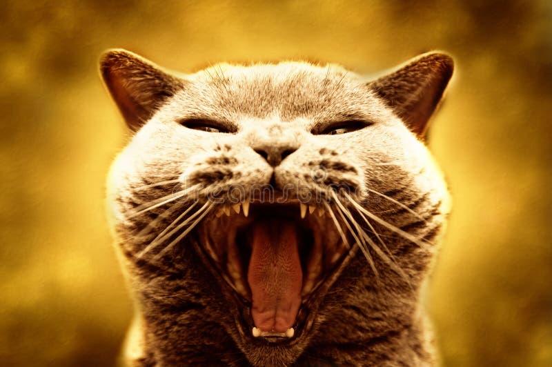 Gato agressivo fotografia de stock royalty free
