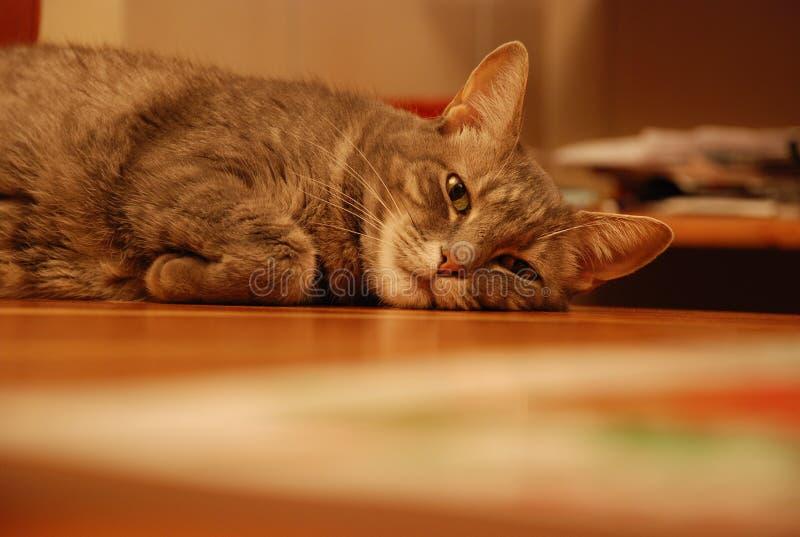 Gato agujereado imagen de archivo libre de regalías